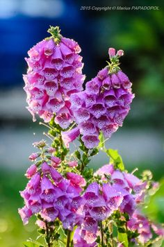 Flowers by Marius Papadopol on 500px