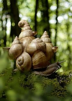 Snail {Talk about carrying a load! Are those other snails stuck to the big one or is it just amazing! Now I may never eat escargot again}Again Again may refer to: Beautiful Creatures, Animals Beautiful, Cute Animals, Wild Animals, Mundo Animal, Tier Fotos, Fauna, Amazing Nature, It's Amazing