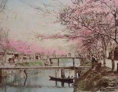「江戸川の桜」手彩色古写真