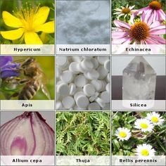 9 Best vis medicatrix naturae images in 2013 | Herbal