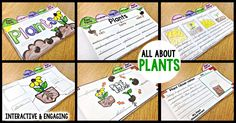 plants, life cycle of plants, plant diagram, plant observation journal