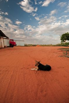 Red Dirt + Dog -  Broome.....one of my favourite places  :-)