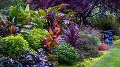 For a palette of warm-tones, combine large interesting foliage like cannas, elephant ear, and the spiky leaves of phormium (New Zealand flax) in shades of purple, green, and red.