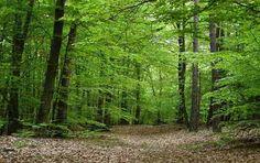 Sognare la foresta Significato di boschi e foreste nei sogni