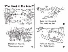 Looking for a break between read-alouds and bed-time stories? Try this science minibook with your 3- to 5-year-old. Encourage your child to explore the plants and animals that live in a pond – all while staying dry!