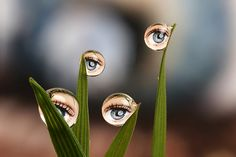 Beautiful Macro Photography by Brian Valentine