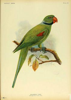 Extinct birds  London :Hutchinson,1907.  biodiversitylibrary.org/item/119044