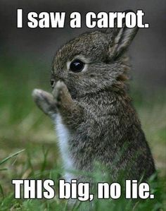 Bunny Rabbit and the Carrot Author of Cinderella Was a Liar and Walking Barefoot www.strollwithout... @BrendaDellaCasa