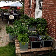 Vores Køkkenhave