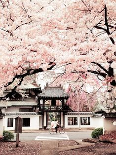 Image de japan, pink, and sakura
