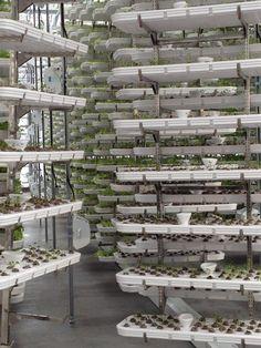 Local Garden Vertical Farm Opens in Vancouver