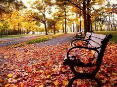Gramado fica extremamente charmosa no outono. As folhas de maple enfeitam as ruas.
