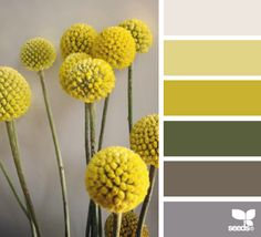Flora Tones - http://design-seeds.com/index.php/home/entry/flora-tones58