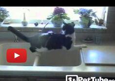 Drive-Thru Cat Wash » Love Meow