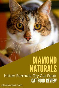 Diamond Naturals Kitten Formula Dry Cat Food Review Kitten Formula Cat Food Reviews Cat Food