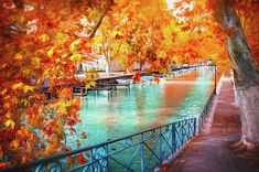 Fall Colors of Canal du Vasse Annecy France Metal Print by Carol Japp. All metal prints are professionally printed, packaged, and shipped within 3 - 4 business days and delivered ready-to-hang on your wall. Choose from multiple sizes and mounting options. Annecy France, Organic Art, Autumn Scenes, Wonderful Picture, Fine Art Photography, Landscape Photography, Fine Art America, Canvas Prints, Canvas Art