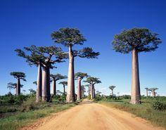 Schon als Kind assoziiere ich mit Madagaskar eine fremde Welt, die so ganz anders sein muss als unsere europäische Welt. Hier ist eine Madagaskar-Erfahrungsbericht.