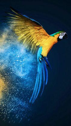 It's feeding time at My Amazing Animal Kingdom, fantasy Macaw art ~ artist unknown Cute Birds, Pretty Birds, Beautiful Birds, Animals Beautiful, Tropical Birds, Exotic Birds, Colorful Birds, Colorful Animals, Exotic Fish