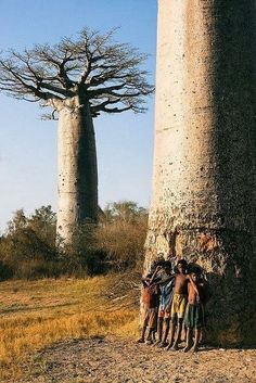 Madagascar. Look at that tree wow
