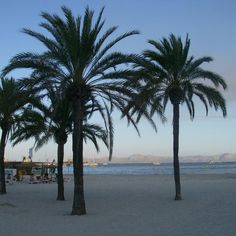 Beach, Alcudia, Mallorca, Spain