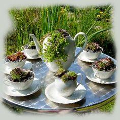 Sukkulenten im Kaffeekanne und Kaffeetassen. Was für ein schöner Gartenblickfang. Quelle: dalia.sharelipstick.com