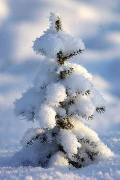 Fresh snow on trees is so pretty Winter Szenen, Winter Love, Winter Magic, Winter Trees, Snow Pictures, Snow Scenes, Winter Pictures, Winter Beauty, Winter Landscape