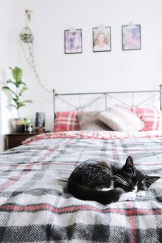HYGGE for your cat ( +20 cat toys)  Cityscape Bliss // Naughty Felines