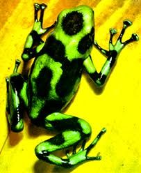 lumo! Rainforest Animals, Frogs, Shades Of Green, Colours, Amazing, Animals Of The Rainforest