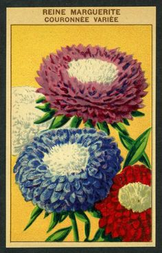 Antique French Seed Pack Label 1920s Flower Lithograph Reine Marguerite 15 | eBay