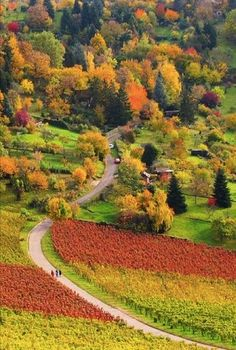 Autumn Colors in the Vineyard in Stuttgart Rotenberg, Germany