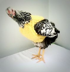 Chicken Sweater, Quality Safely Fitting Sweater for Chickens and Roosters, Sweater for Chickens, Chicken Clothes