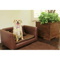 Found it at Wayfair - Deluxe Orthopedic Memory Foam Dog Chair Set