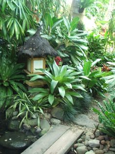 44 pool landscaping ideas tropical small backyards - Savvy Ways About Things Can Teach Us - My Pool house - Paisagismo Tropical Backyard Landscaping, Tropical Garden Design, Landscaping With Rocks, Landscaping Tips, Tropical Plants, Tropical Gardens, Landscaping Software, Tropical Pool, Exotic Plants