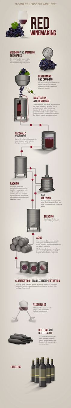 Brandy and Wine. Check Out The Article Below For A Great Source Of Wine Tips. Wine is a fairly vast topic. Keep these tips in mind to ensure your next experience with wine Pizza Y Vino, Wine Infographic, Process Infographic, Wine Making Process, Wine Facts, Wine Chart, Bar A Vin, Wine Education, Homemade Wine