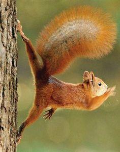 22 Squirrels That Are So Animated You Would Think They Were Human 22 esquilos tão animados que você pensaria que eram humanos Animals And Pets, Baby Animals, Funny Animals, Cute Animals, Wild Animals, Beautiful Creatures, Animals Beautiful, Cute Squirrel, Squirrels