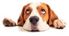 How Much Do You Know about Dogs? – Dogs-n-Jewels
