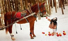 Little girl feeding apples to a horse. Somewhere in Bucovina, Romania (Via… Most Beautiful Horses, All The Pretty Horses, Animals Beautiful, Beautiful Places, Winter Love, Winter White, Horse Love, Memento Mori, Animals For Kids