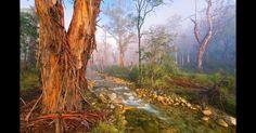 """""""Floresta Mística"""", de Mark Gray, mostra um riacho cercado de árvores de formas curiosas.  Fotografia: Mark Gray/BBC."""