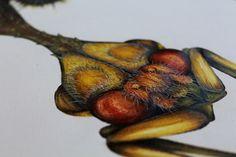 Arthropod Alphabet on Behance
