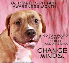 Pit Bull Awareness month is October!