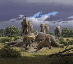 Deinotherium, Machairodus and Magericyon in the Miocene of Madrid, Spain by Mauricio Antón