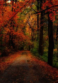 "darkface:  THE TRAIL TO AUTUMN (by EZ_""T"" PHOTO)"