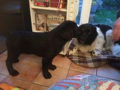 Pup meets Sam