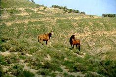 Rocky Ridge Wild Horses!