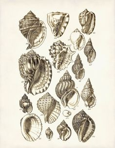 Seashells Poster Seahells Art Print Beach Art by AdamsAleArtPrints