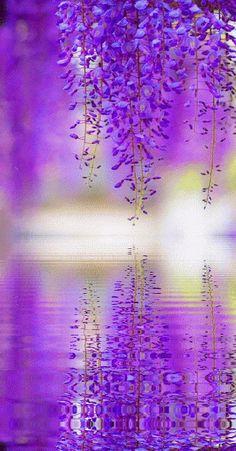 Purple, Violet, Фиолетовый..
