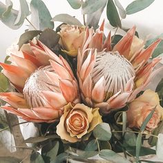 Floral Wedding, Wedding Bouquets, Wedding Flowers, Fresh Flowers, Beautiful Flowers, King Protea, Protea Flower, Language Of Flowers, Holy Cross