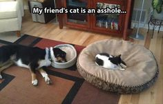 Attack Of The Funny Animals – 52 Pics