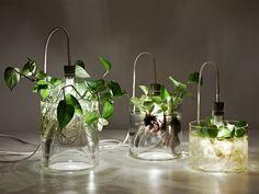 Dazzling Plant Grow Lights