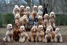 This recent fan submission is one of the most impressive dog group shots we have ever seen.